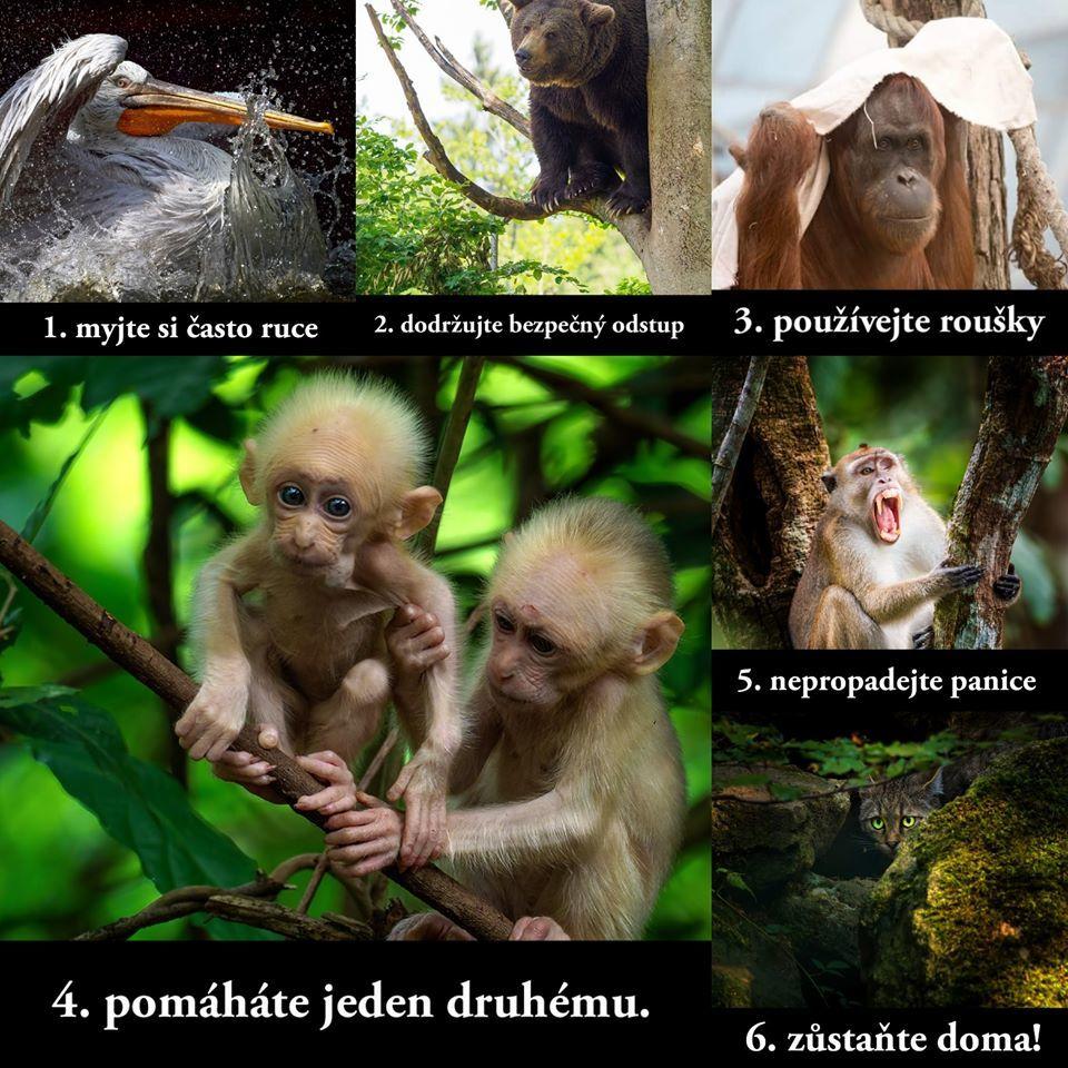 Pokyny zvířátek k mimořádné situaci